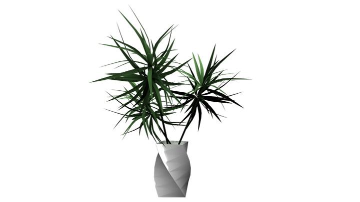 Plant_11