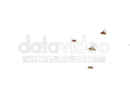 Bee_01