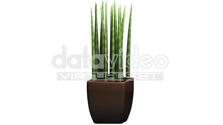 Plant_2