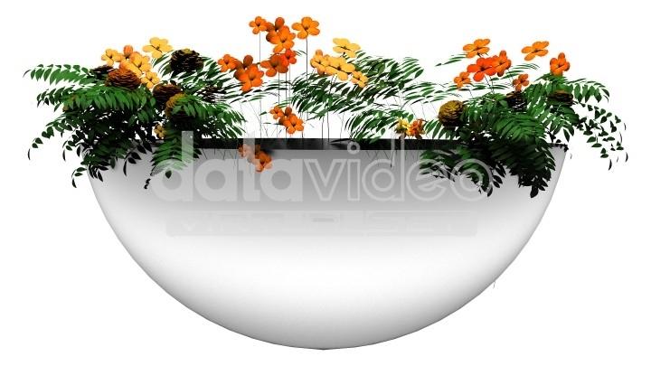 plant_5